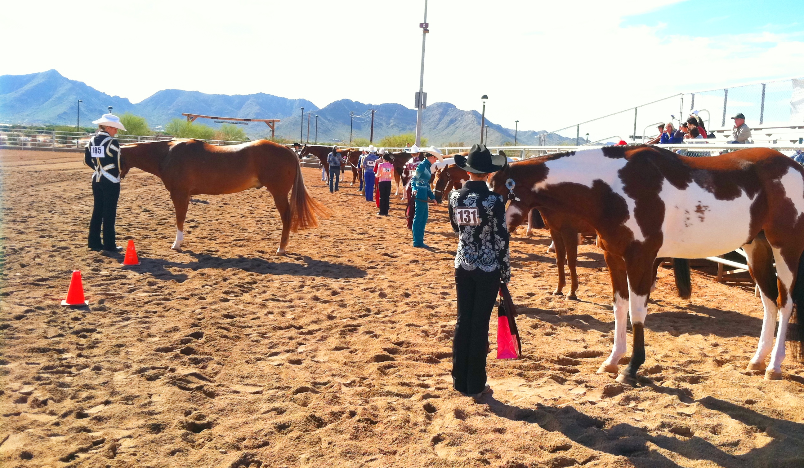 Horse Training Program